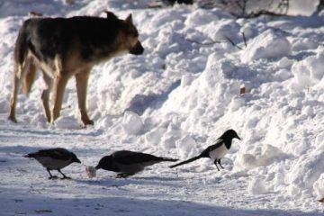 Cría cuervos……. O perro que come huevo aunque le quemen el hocico