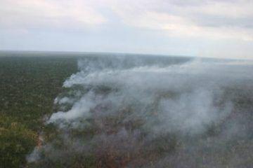 Quedan Extinguidos Todos Los Incendios En Quintana Roo: INFOQROO