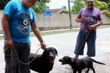 Invita Ayuntamiento de Bacalar a campaña de esterilización, canina y felina