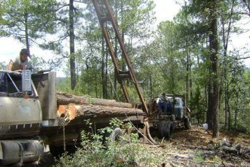 Productores Forestales de Quintana Roo continúan siendo acosados por la PROFEPA