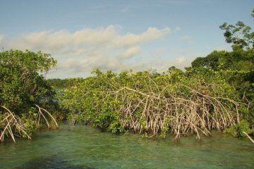 Reverdece Bacalar; Convertido en un Paraíso Verde