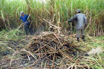 Representantes del Ingenio Azucarero San Rafael de Pucté no han cumplido con los acuerdos