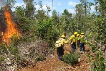 Q. Roo susceptible a incendios forestales en 2015: Conafor