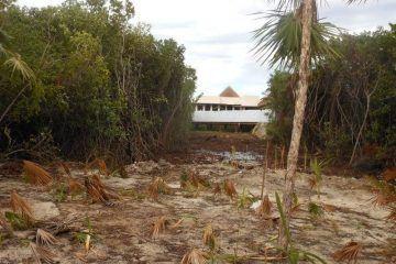 Impune Ecocidio En Playa Del Carmen