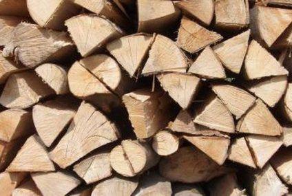 Definen áreas para extraer productos madereros en FCP