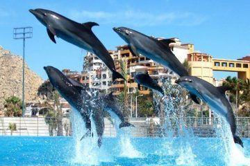 """Delfinario de Cancún cierra por """"recomendación"""" de Profepa"""