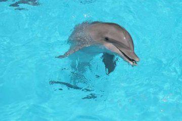Profepa ordena suspender actividades con delfines en Hotel Moon Palace de Cancún
