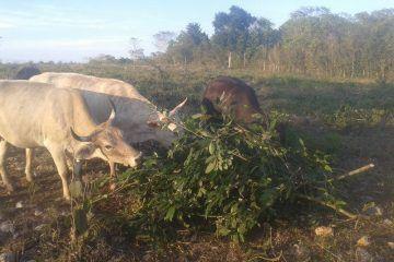Quintana Roo pasa la prueba, podrá seguir exportar (vender) carne bovina a Estados Unidos