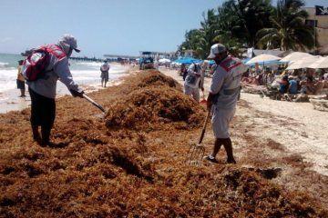 En Solidaridad trabajo activo en limpieza de playas