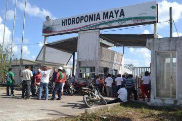 """De """"ratero"""" no bajan trabajadores de Hidroponía Maya al líder de la CTM en Quintana Roo, Isidro Santamaría"""