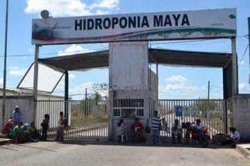 Comienzan pláticas para liquidar a ex trabajadores de Hidroponía Maya