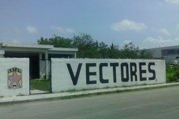 Por falta de personal, en Quintana Roo existe el riesgo que se propague el dengue y paludismo