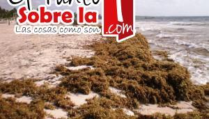 Sargazo playa