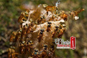 Cría de abejas y producción de miel, son también atractivos para el turismo