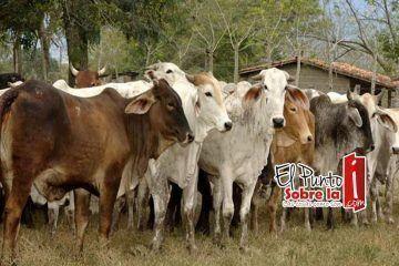 """Administración de """"Chepe"""" se echa a la bolsa a los ganaderos"""