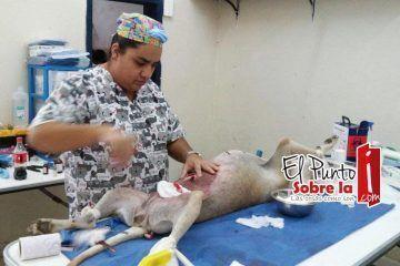 Culmina tercera campaña de esterilización canina y felina en Bacalar