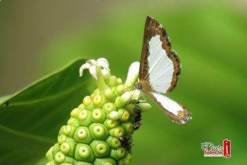 Mediante exposición fotográfica se incentivará a cuidar los recursos naturales