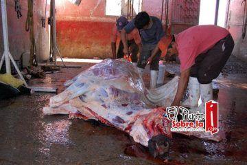 """Cofepris admite """"mataderos clandestinos"""" en zona norte de Quintana Roo"""