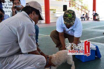 Meten control entre la población canina de FCP
