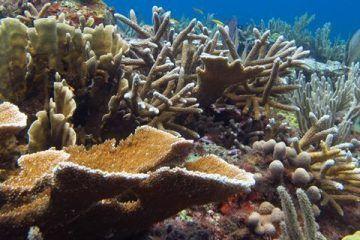 Extinción amenaza arrecifes coralinos de Quintana Roo