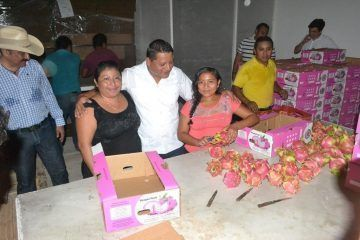 Productores de pitahaya cosechan los frutos de su trabajo