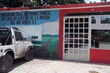 Tres gallos buscan dirigir a los productores de caña del Rió Hondo