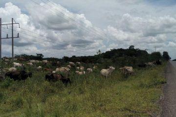 Legisladores le quedan a deber al sur de Quintana Roo