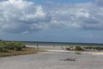 Llamado del ayuntamiento de isla mujeres para la protección del ecosistema de la laguna Chacmuchuch
