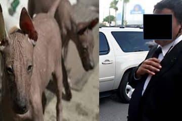 La grilla dice: De xoloitzcuintle en la CAPA a wachoma en Protección Civil estatal
