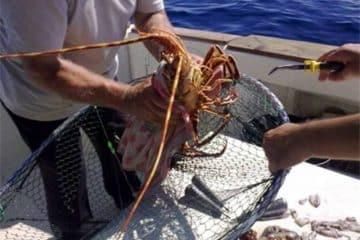 El pesquero, uno de los sectores golpeados por el incremento a la gasolina