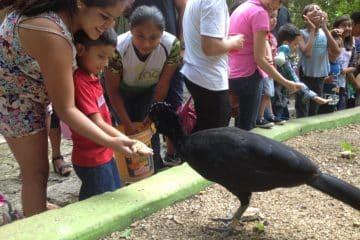 Incrementa número de visitantes en Zoológico Payo Obispo