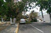 Reportan vientos huracanados en Yucatán