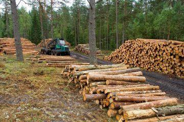 Engorrosos trámites limitan exportación de maderas tropicales