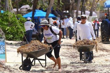 Refuerza Solidaridad limpieza del sargazo en playas públicas