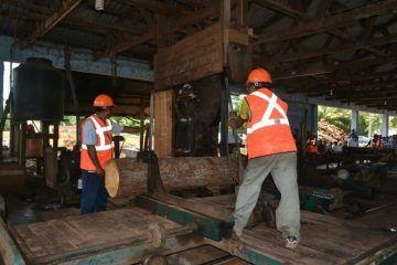 Sector forestal se declara a la espera de que se cumplan los compromisos de campaña