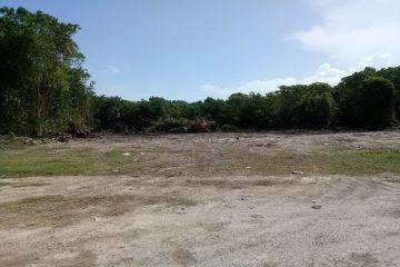 Devastan área verde de Chetumal con flora amenazada, para construir un motel