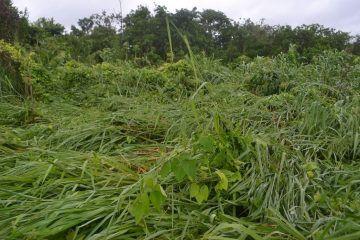 SAGARPA dictamina pérdidas por casi 7 mil hectáreas de cultivos en FCP
