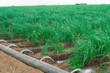 Pierden campesinos del sur por robo de sus sistemas de riego