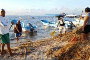Sargazo, ahuyenta clientes a prestadores de servicios náuticos de la Costa Maya