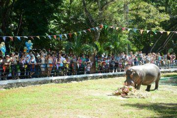 Fallece el hipopótamo Andrés del Zoológico Payo Obispo