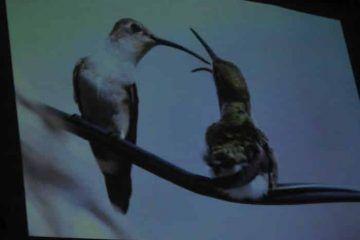 ((FOTOS)) Inauguran  Exposición Fotográfica virtual