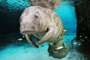 La extinción de especies endémicas en Quintana Roo