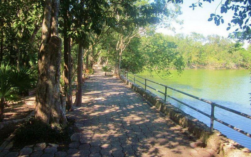 Llegan m s cocodrilos al lago artificial del parque for Estanque ecologico