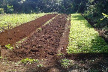 Horticulturores carrilloportenses, exigen más apoyos a los tres órdenes de Gobierno