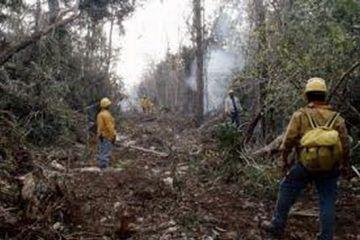 Registra Quintana Roo primeros dos incendios forestales de la actual temporada