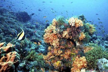 Prestadores de servicios acuáticos desconfían en creación de arrecifes artificiales