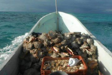 Pescadores furtivos operan en la Costa Maya