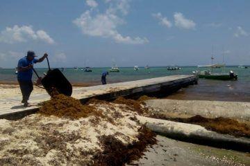 Vienen recursos para contener sargazo en playas de Solidaridad