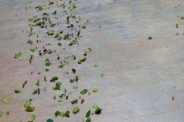 Hormigas ¿Agoreras?
